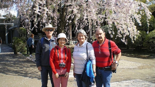 Tour group under the cherry blossoms in Tokyo