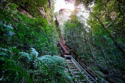 Rail cart rides downhill in Blue Mountains jungle