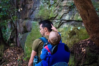 Man with child in a pack on his back walk through forest of the Blue Mountains
