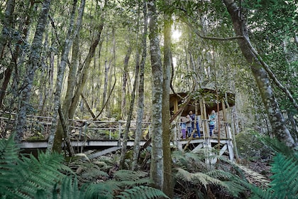 Forest gazebo on elevated path in forest of Blue Mountains, Australia