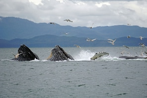 Premier Whale Watch Tour-3 hrs