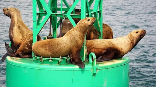 Sea lions lounging on buoy off Alaska