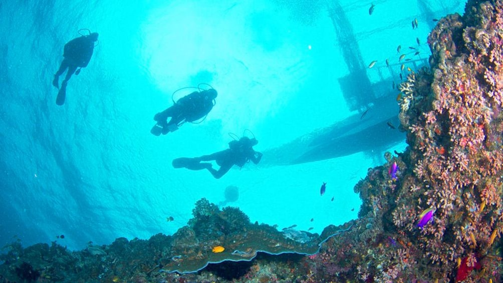 Show item 5 of 5. Upward view of three SCUBA divers above a reef and below a boat