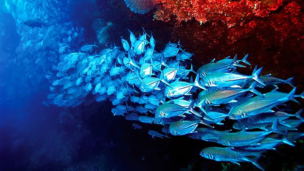 Show item 3 of 5. School of fish under a reef