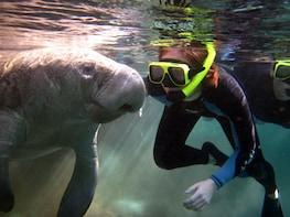 Semi-Private VIP Swim with Manatee Tour