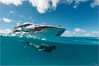 Bundaberg Full Day Snorkelling Tour to Lady Musgrave Island