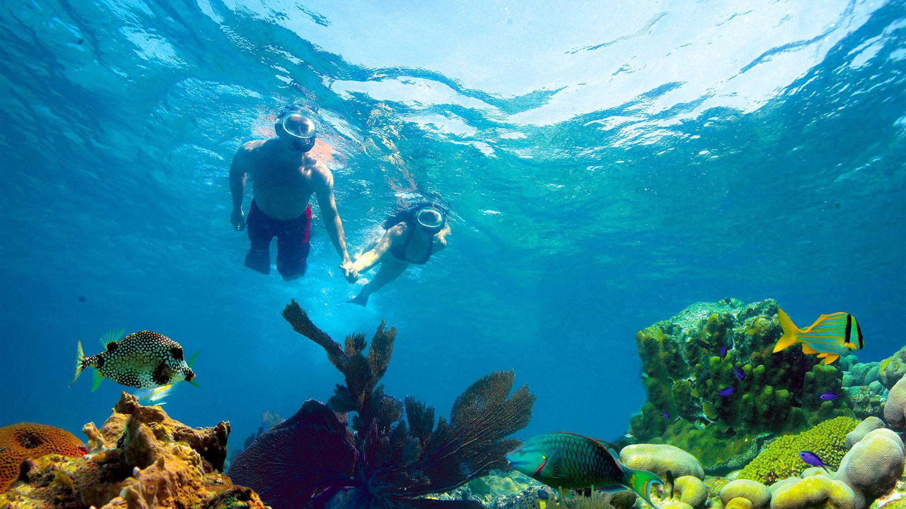 Double-Dip Snorkeling Adventure