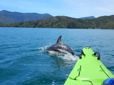 View of dolphin breaking surface of water near kayaker