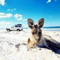 Bribie Island Adventure Tour