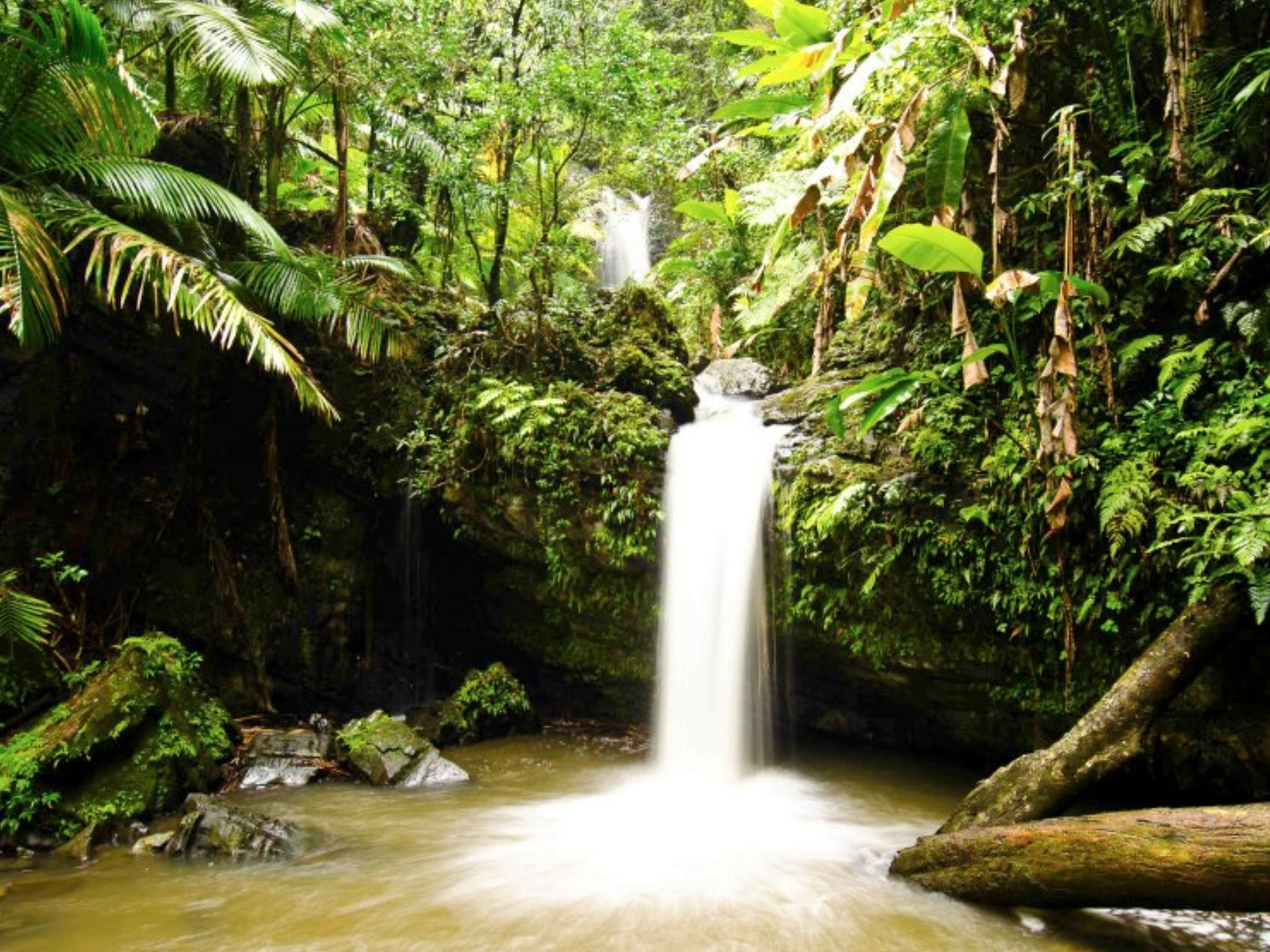 El Yunque Rainforest Guided Hiking with Waterfall Tour