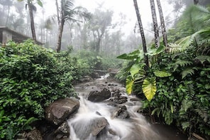 El Yunque National Forest Half-Day Tour