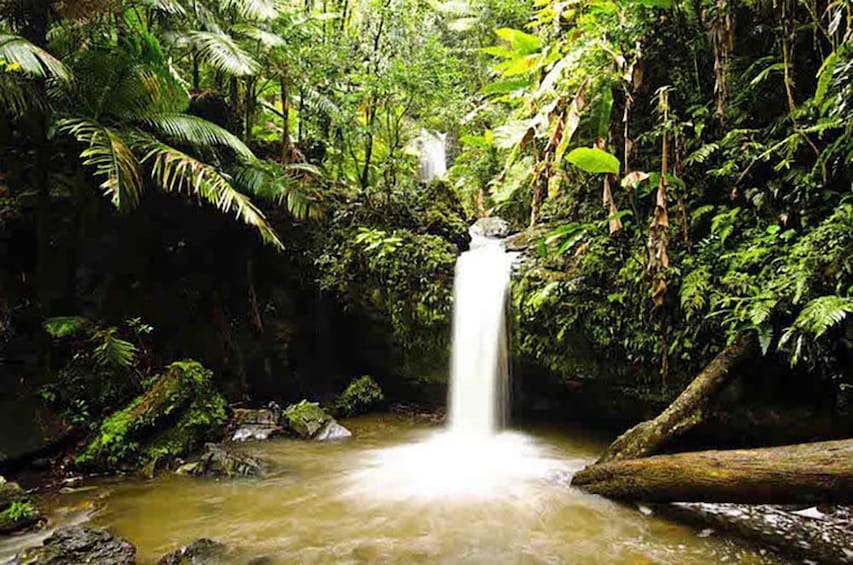 Show item 2 of 9. Waterfall at the El Yunque National Forest
