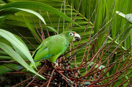 Green bird at the El Yunque National Forest