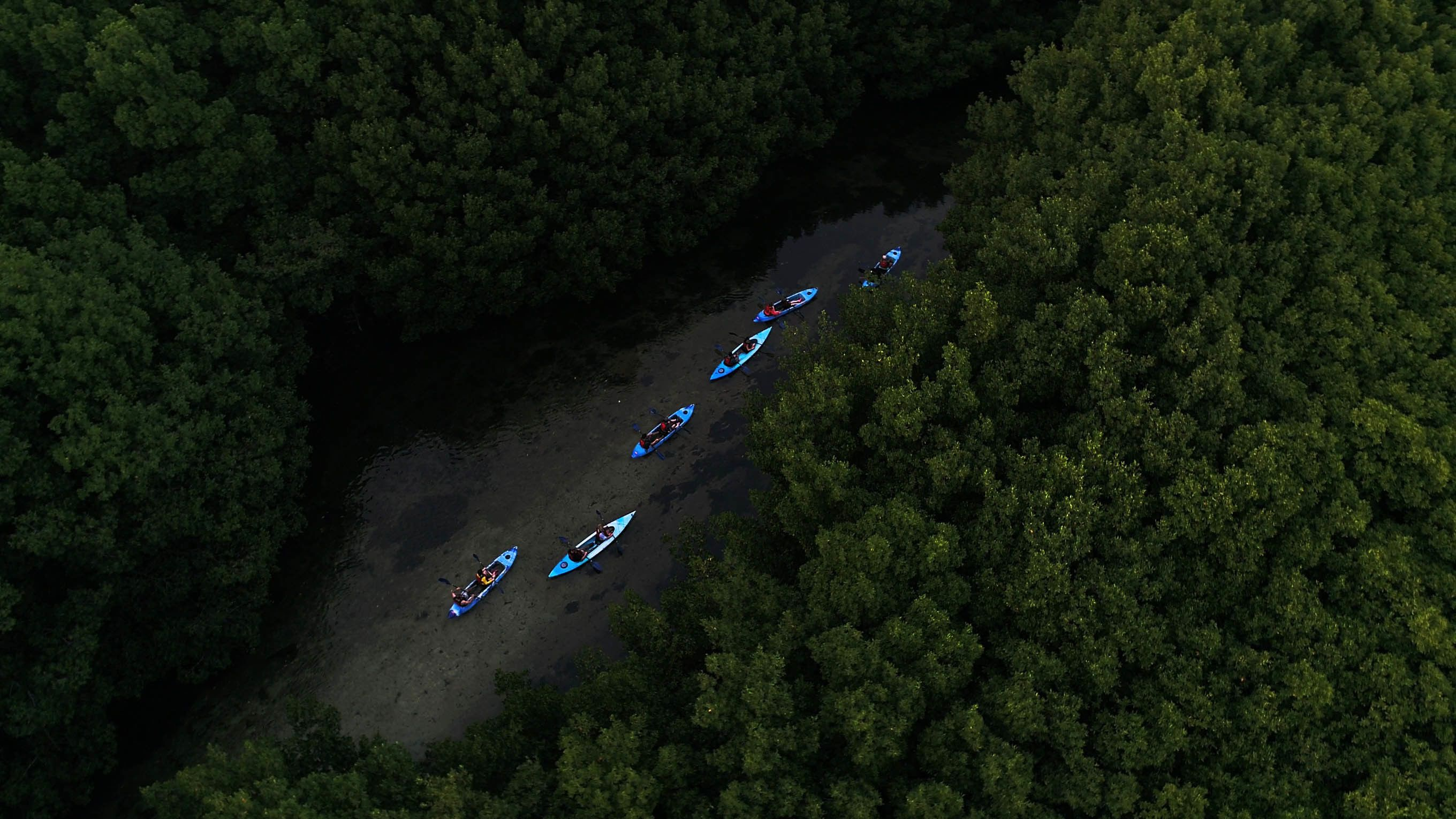 Bioluminescent Bay Glass Bottom Kayak Tour