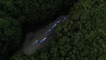 ,Kayak en la Bahía Luminiscente