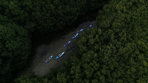 Kayakers traveling down river in forest in Puerto Rico