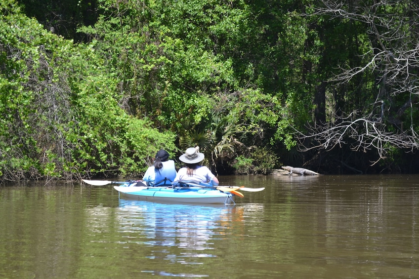 Show item 1 of 4. Alligator seen on the Delta Wildlife Kayak Tour