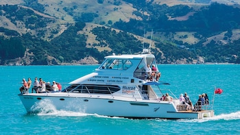 Akaroa Dolphins - Harbour Nature Cruises