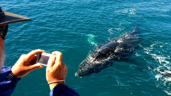 Ultimate Whale-Watching Tour