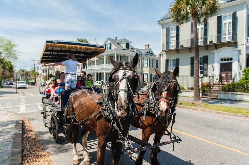 Show item 8 of 8. Horses harness up to carriage in Charleston