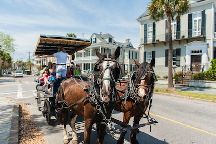 Horses harness up to carriage in Charleston