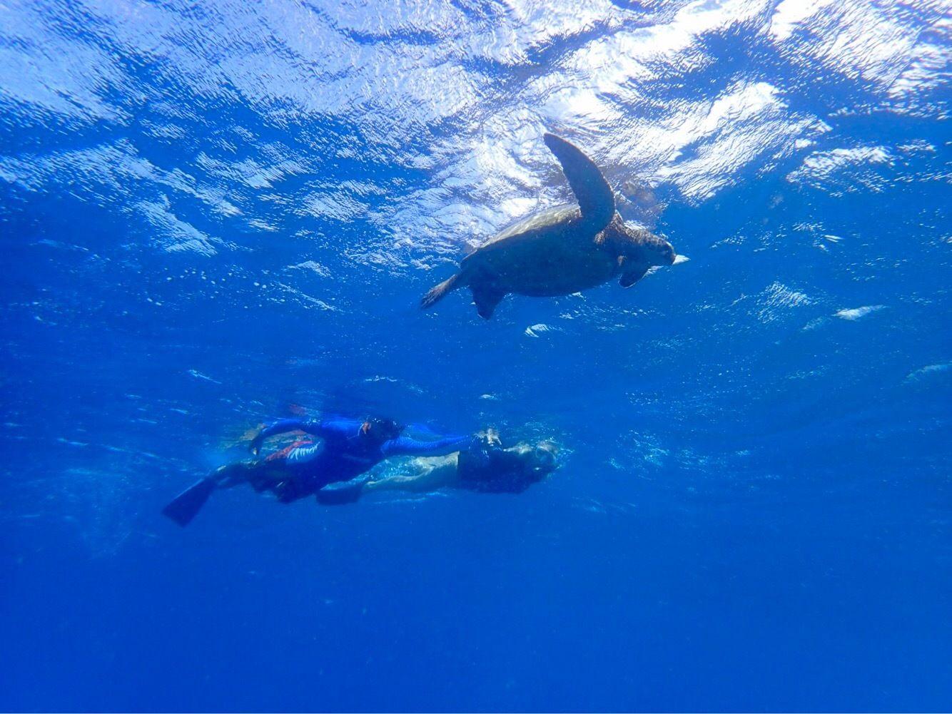 Snorkel with Green Sea Turtles on Kauai's South Shore