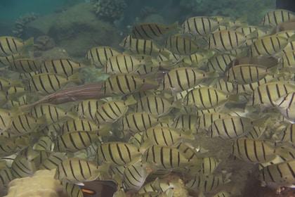 Tropical fish in Kauai