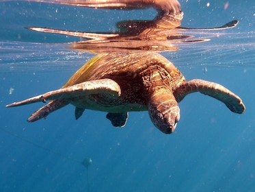 Underwater view of a seaturtle in Kauai