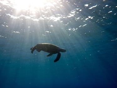 Seaturtle underwater in Kauai