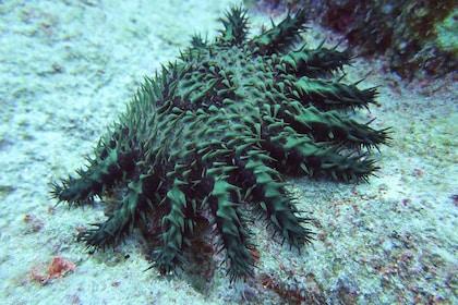 Underwater in Kauai