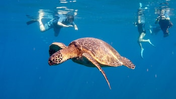 Snorkel with Green Sea Turtles on Kauai's South Shore