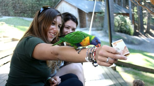 Woman with a colorful bird on her arm at Kiwi Birdlife Park in Queenstown