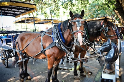 Horses harnessed up to carriage in Charleston