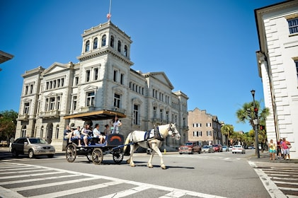 Horse drawn carriage traveling down street in Charleston