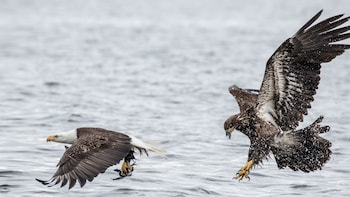 Eagle-Spotting Winter Rafting Tour on the Squamish River