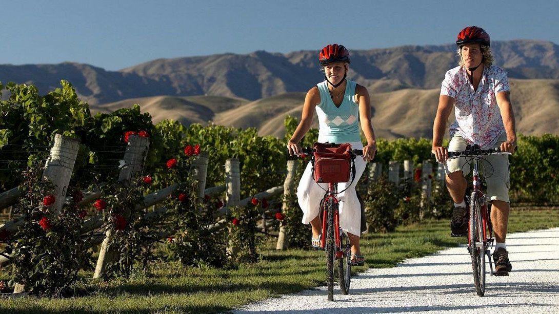 Marlborough Region Half Day Guided Biking Wine Tour