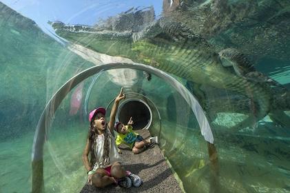 Croc Tube.jpg