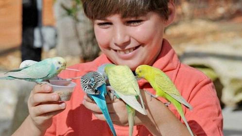Boy feeding birds at the Zoo Miami