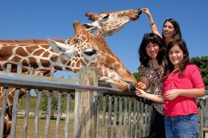 GiraffeFeedingHorizontal.jpg