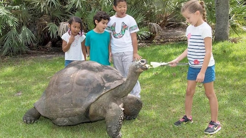 Children interacting with a Tortoise at Zoo Miami