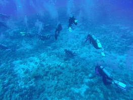 2 Tank Boat Dive - Sea Turtle Cove and Tropical Reef