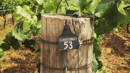 Premium Winelovers Experience - Full Day Swan Valley Tour