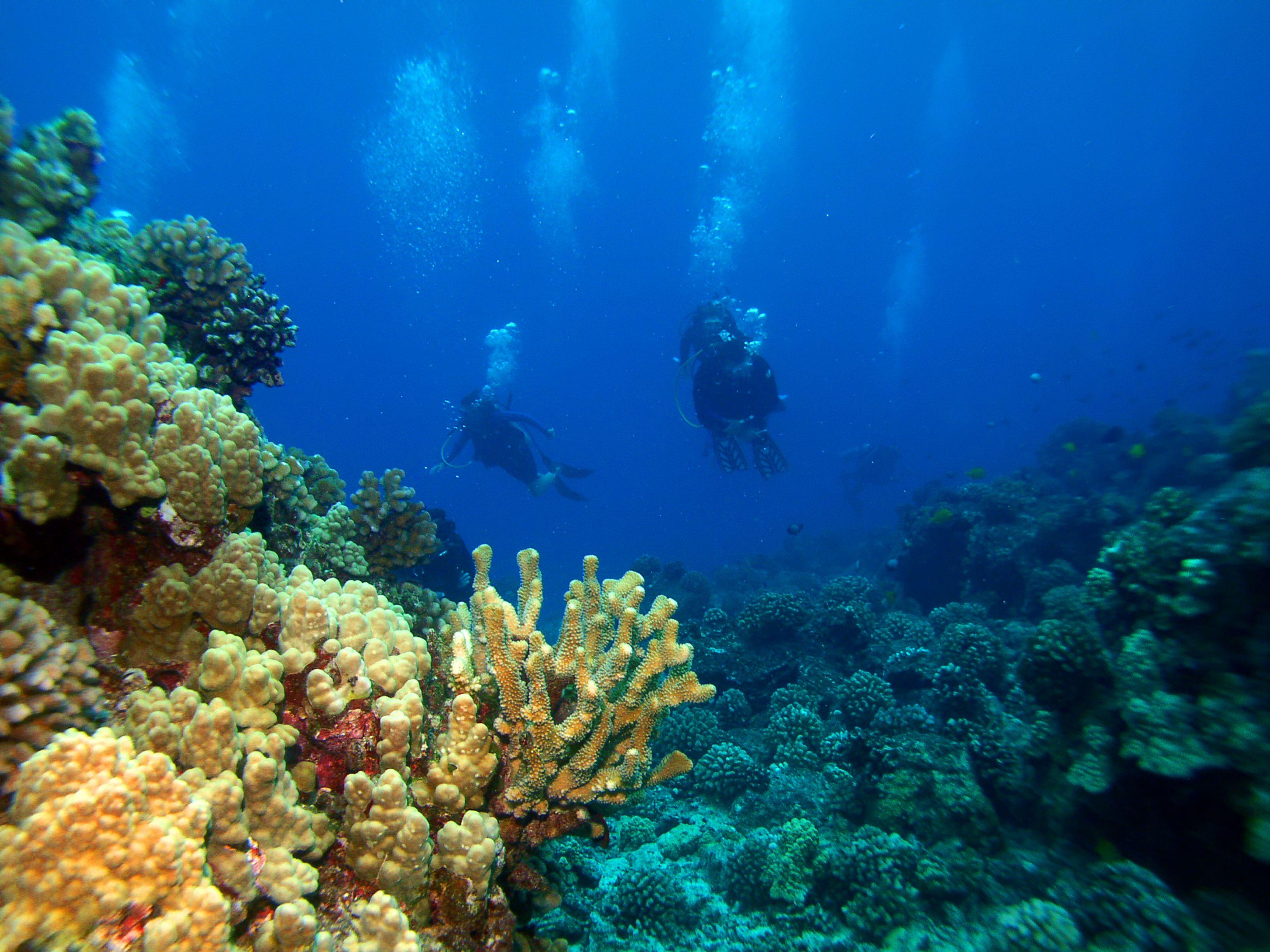 Scuba divers swimming through coral reefs around Big Island