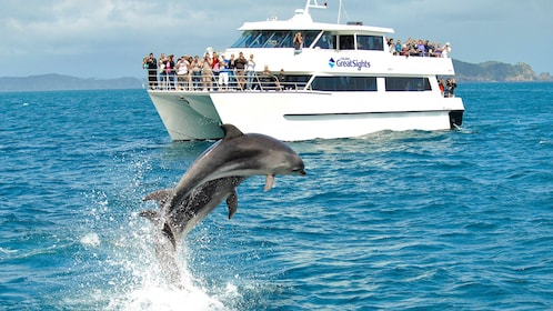 Dolphins leaping near cruise boat in Auckland