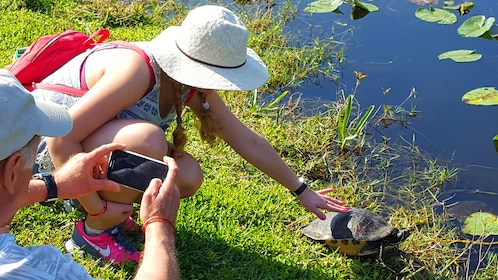 Woman pets a turtle next in the Everglades