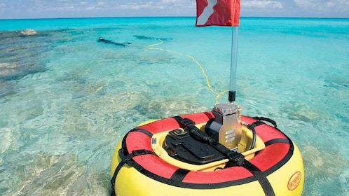 SZUBA Tankless Diving Adventure in Smith's Reef - Providenciales
