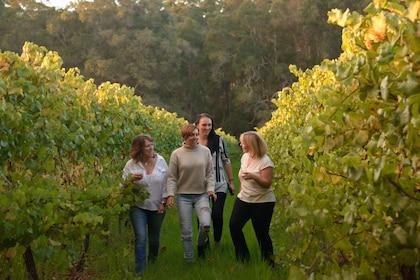 Group tours a vineyard