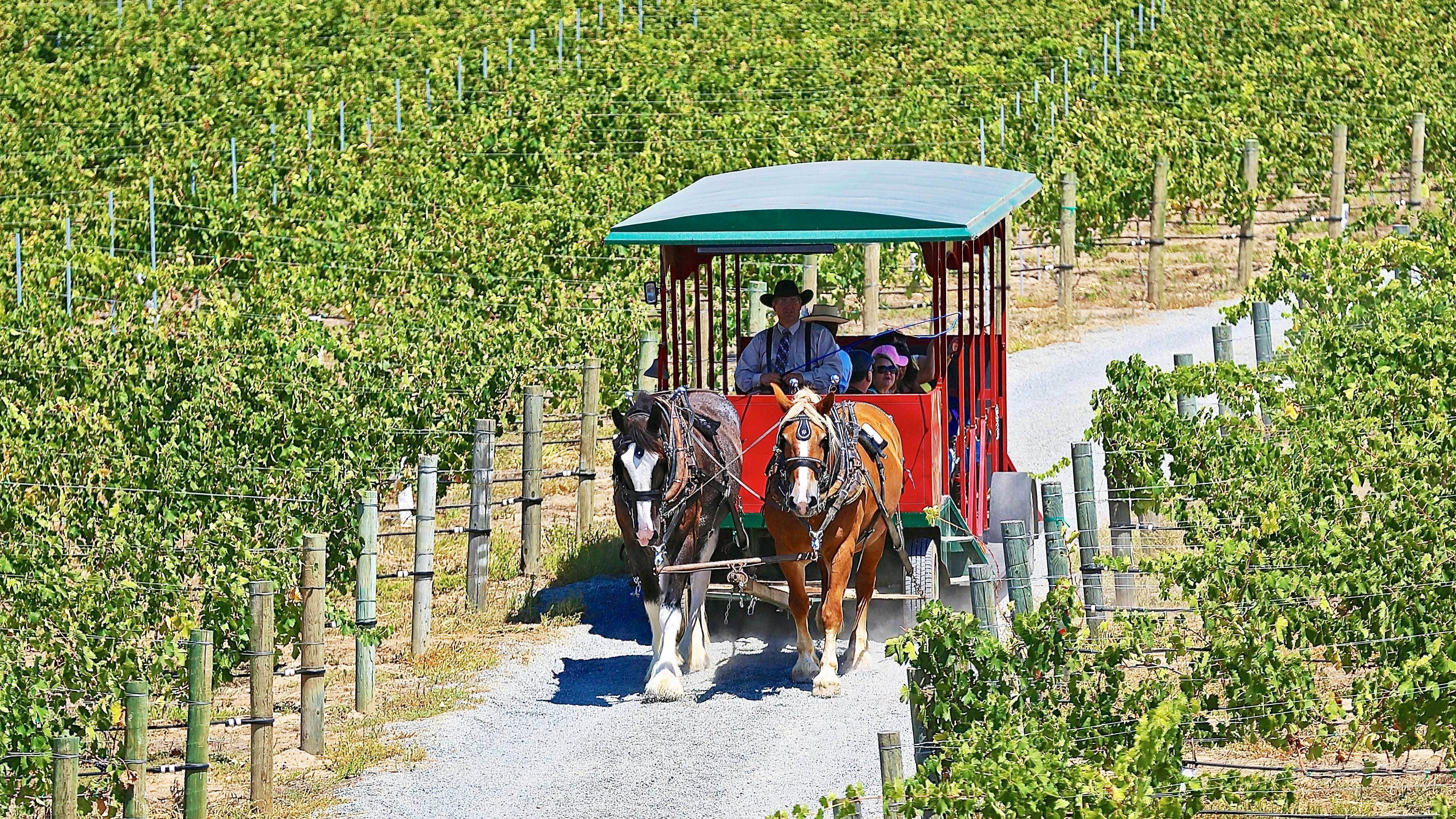 Horse-Drawn Trolley Winery Shuttle