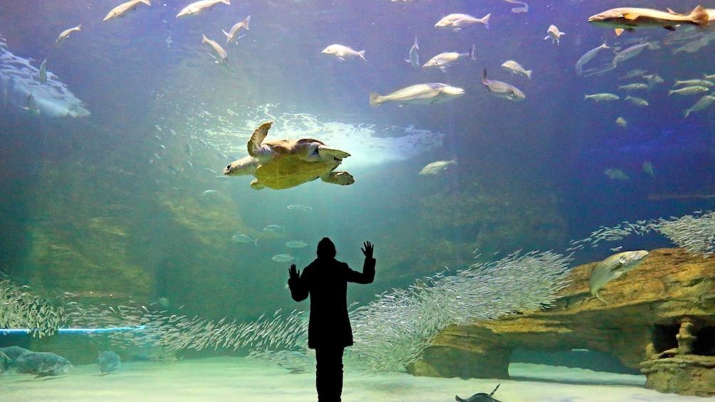 Charger l'élément 1 sur 5. Sea turtle and fish at the Two Oceans Aquarium Cape Town, South Africa