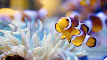 Ver elemento 3 de 5. Fish at the Two Oceans Aquarium Cape Town, South Africa